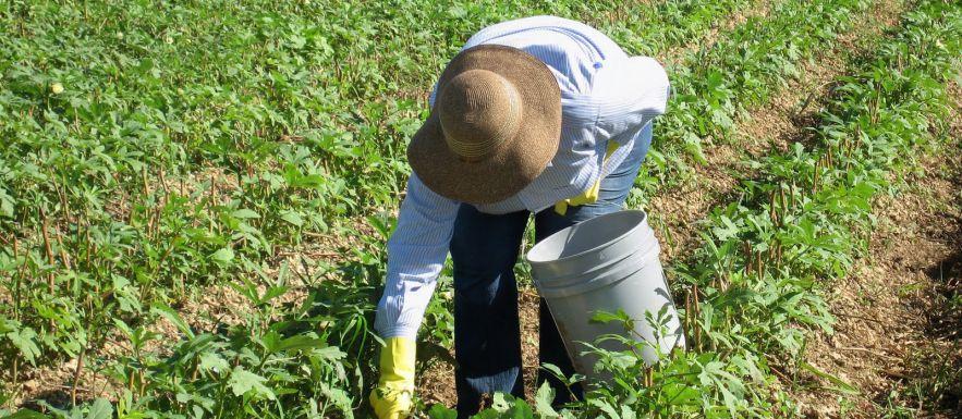 farmworker-photo-883x385-c